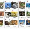 Bonito abecedario de animales – Una forma creativa para aprender
